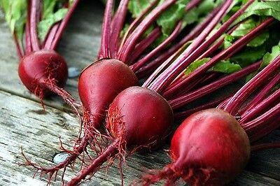BEET * RUBY QUEEN * CANNING*PICKLED*FRESH*200 SEEDS*EAT TOPS*ROUND ROOTS*HEALTHY