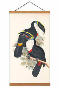 Biodiversity-Birds-Culmenated-Toucans-Canvas-Wall-Art-Print-Poster-with-Hanger