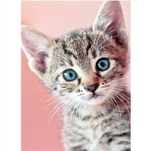 Cute Tabby Kitten Cat blue eyes greetings card blank birthday pink ...