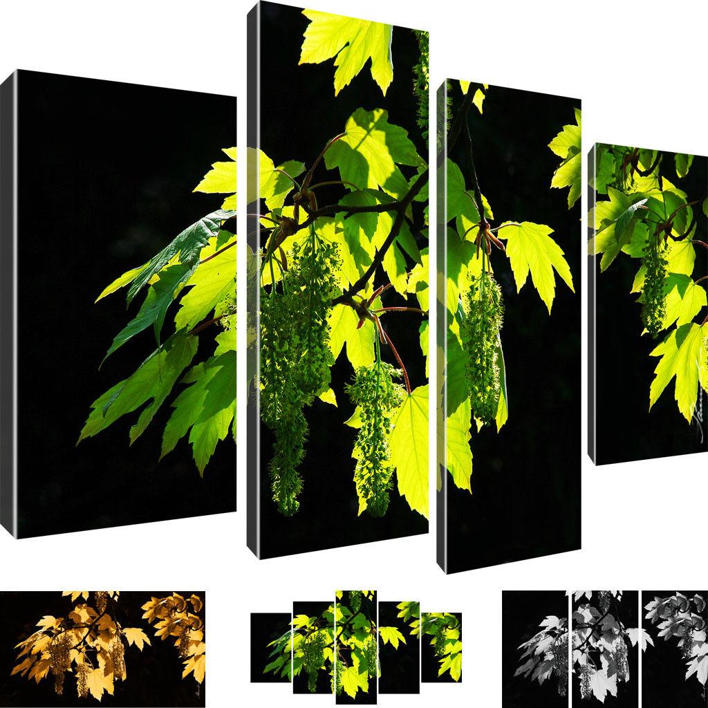 Natur Blatt Zweig Bilder Leinwandbild auf Leinwand