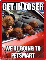 Funny Dog Humor Dachshund Petsmart Refrigerator Magnet