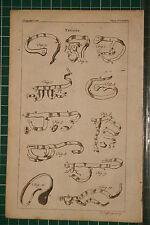 1764 antico stampa ~ travi reticolari ~ vari strumenti chirurgici