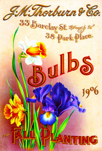 1906 Thorburn Bulbs Vintage Flowers Seed Packet Catalogue Advertisement Poster