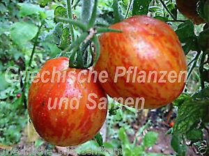 Roughwood-golden-Tiger-gestreifte-Tomate-RARITAT-10-frische-Samen-Balkon