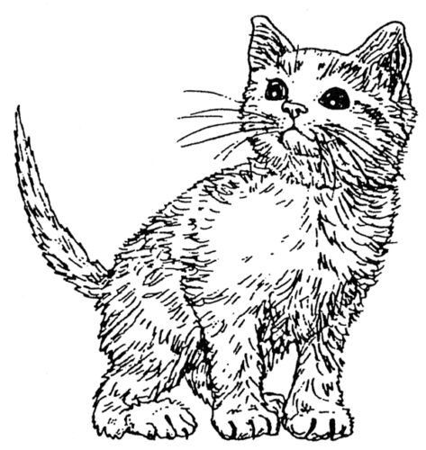 Unmounted Rubber Stamps Cats Feline Cat Stamps Lil Kitty Stamp Art Stamps