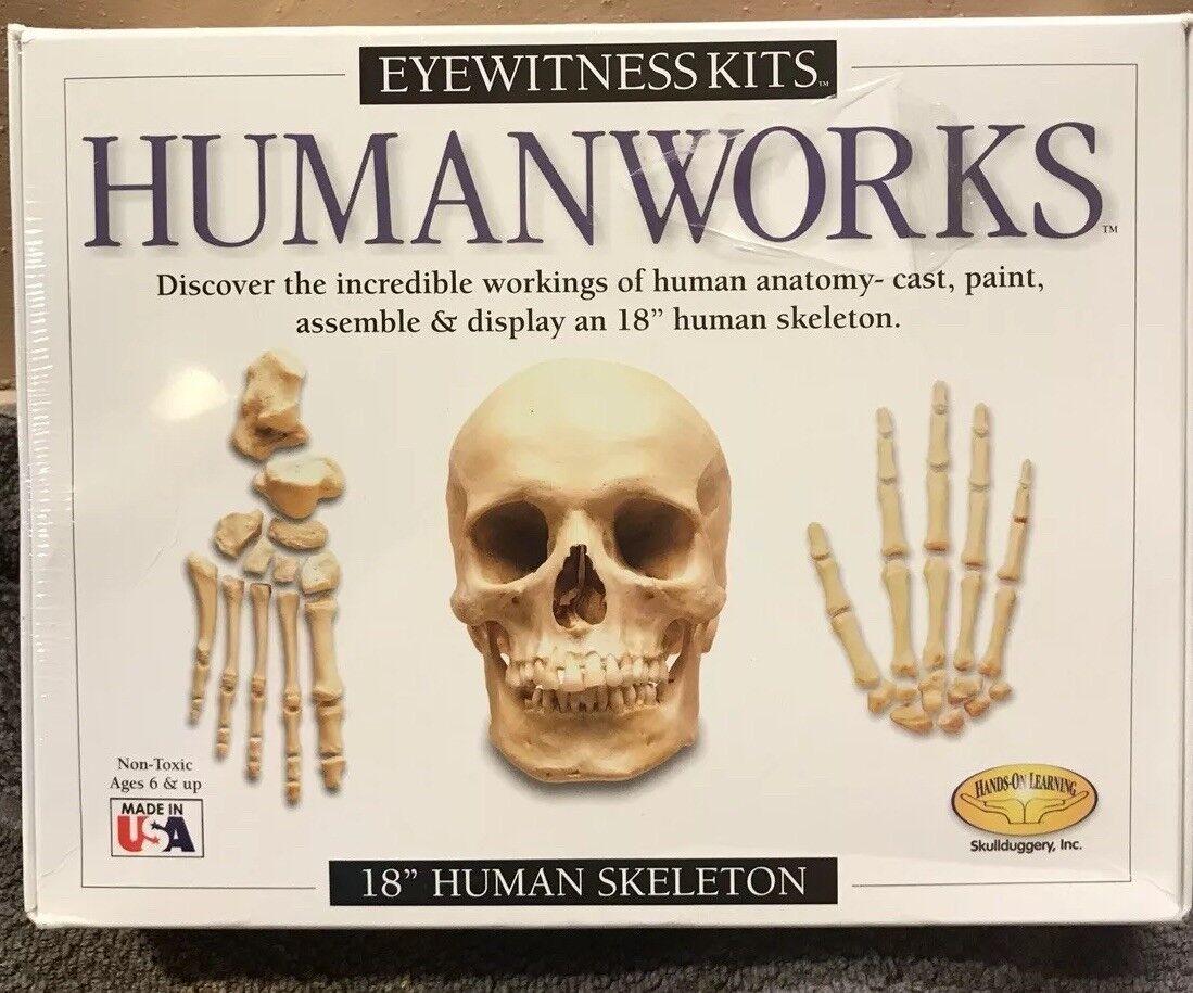 "Eyewitnesskits Humanworks 18"" Human Skeleton Mold Ages 6+ Educational Learning"