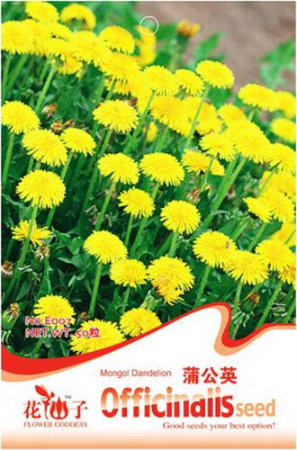 Mongol Dandelion Seed 50 Seeds Taraxacum Mongolicom Herba Taraxaci Seed Hot E007