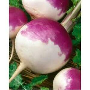 Turnip-Purple-Top-White-Globe-Turnip-Seeds-Organic-NON-GMO-50-Seeds-per-pac