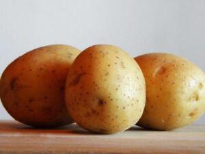 Potato GOURMAND or LAKOMKA Seeds organic seeds potatoes Ukraine 0.01 g Z non gmo