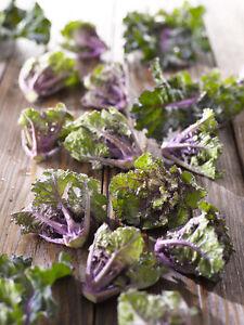 Legumes Fleur Choux Kale Brussel Sprout Cross 30 Finest Seeds Ebay
