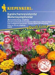 Kiepenkerl-Kaninchenresistente-Blutensymphonie-3353-Fleurs-D-039-Ete-Luxuriante