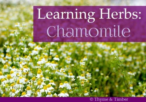 Seed Certified Organic Chamomile German ... 300ct