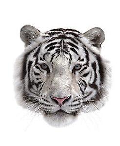Aufbuegler-Transferfolie-Tiger-klein-ca-7-5-x-8-cm-Katze-T-Shirt-Buegelbild