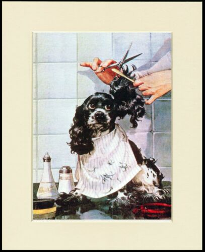 COCKER SPANIEL GETTING A HAIRCUT LOVELY COMIC DOG PRINT MOUNTED READY TO FRAME