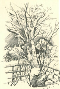 Clifford-H-Thompson-1926-2017-1991-Charcoal-Drawing-Study-of-a-Tree