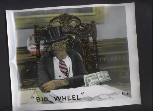 Monkey Shines 1950's exhibit arcade card ORIGINAL PRODUCTION Archive BIG WHEEL