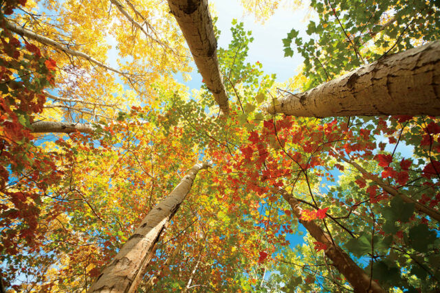 LANDSCAPE ART PRINT - Forest Canopy by Michael Hudson 24x36 Photograph Poster