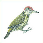 rainbirdfossilsminerals