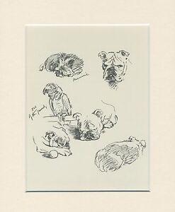 BULLDOG CHARMING IMAGES DOG ART PRINT by MAC LUCY DAWSON READY MOUNTED