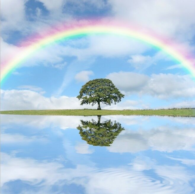 3D Regenbogen-Baum069 Fototapeten Wandbild Fototapete Bild Tapete Familie Kinder