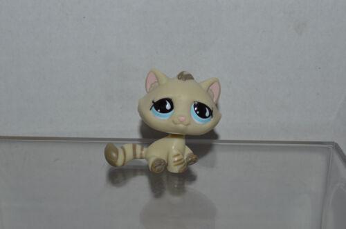 Littlest Pet Shop~#563~Kitty Cat~Sitting~Cream Gray Striped~Blue Teardrop Eyes