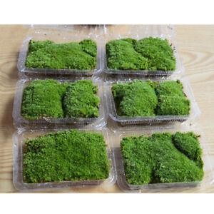 Lichen-Moss-Emulation-Lawn-Garden-Stakes-Micro-Landscape-Decor-Mini-G9CA