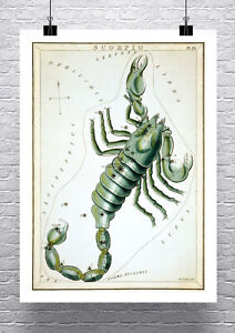 Details about Scorpio Zodiac Sign Vintage Astronomy Rolled Canvas Giclee  Print 24x32 Inches