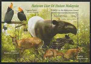 315M-MALAYSIA-2004-WILDLIFE-IN-THE-MALAYSIAN-FOREST-MS-FRESH-MNH