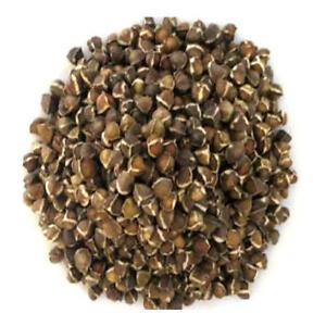 MéThodique 25 Semi Di Moringa Oleifera.l'albero Che Purifica,nutre,guarisce,benessere,unico Nous Prenons Les Clients Comme Nos Dieux