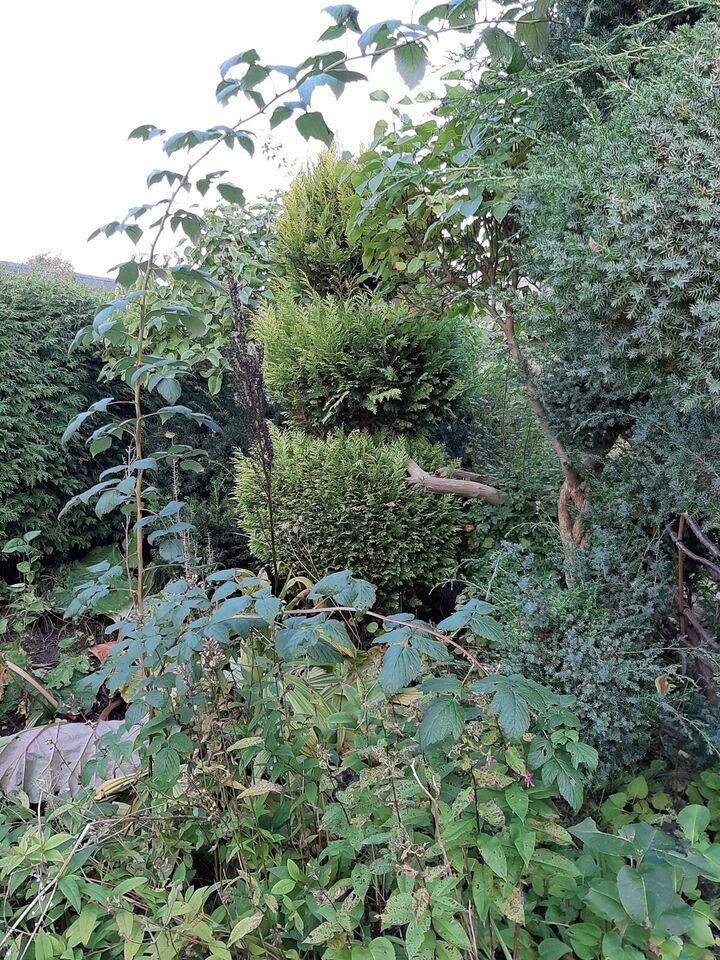 Nåletræ og buske af forskellige slags, Diverse