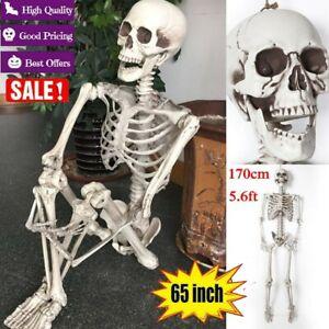 65-Life-Size-Human-Skeleton-Model-Halloween-Posable-Movable-Bones-Prop-Decor-B1