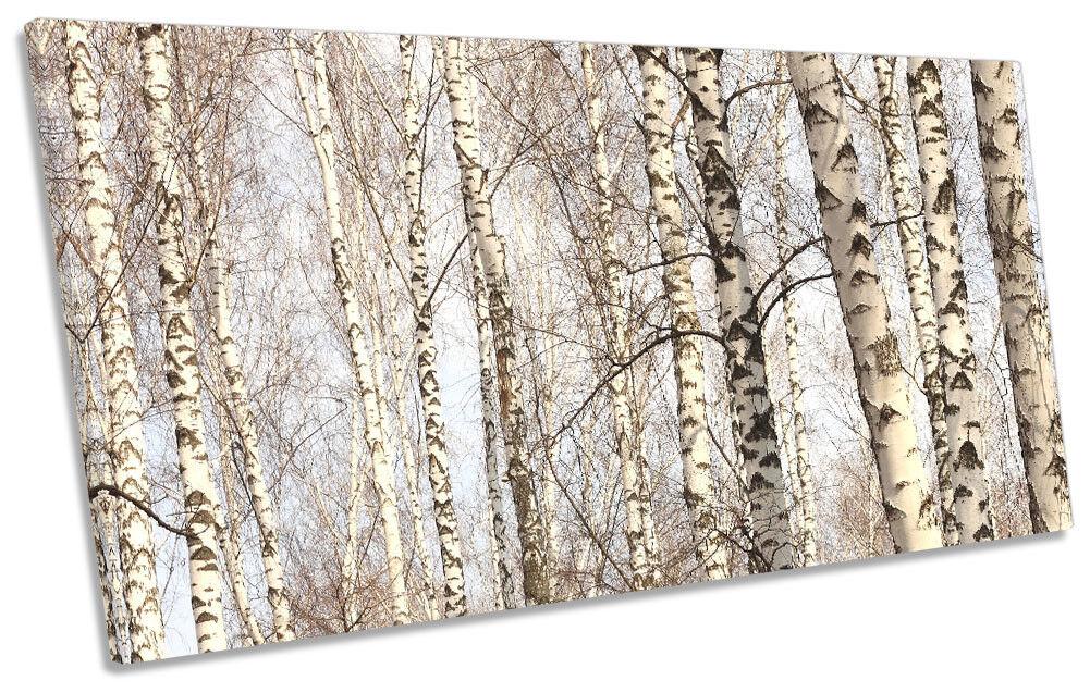 Forest Birch Trees Trunks Framed PANORAMIC CANVAS Drucken Wand Kunst