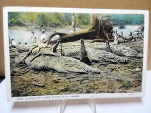 1933-Postcard-A-Good-Days-Hunt-Pacora-River-Panama-Huge-Crocodiles