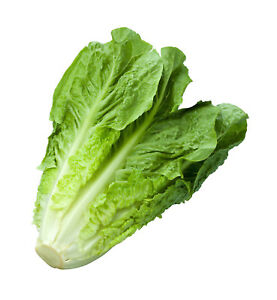 Lettuce-Romaine-Parris-Island-Cos-Non-GMO-Heirloom-Vegetable-Seeds-Sow-No-GMO