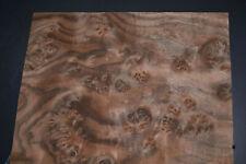 Claro Walnut Burl Raw Wood Veneer Sheet 12 X 165 Inches 142nd Thick 7367 21