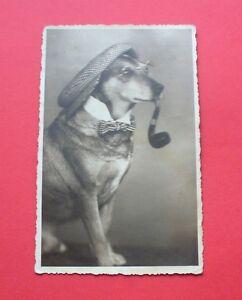 1937 ? - dog dachshund ? - chien teckel ? Hund Dackel ? pies jamnik ? - Besko, Polska - 1937 ? - dog dachshund ? - chien teckel ? Hund Dackel ? pies jamnik ? - Besko, Polska