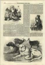 1855 Harrison Weir St Bernard Dogs Chamois Saxon Pigeons