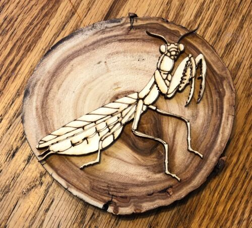 """Nice ASPEN Wood PREYING MANTIS Insect//Animal WALL PLAQUE//MOUNT 4/""""-5/"""" Diameter"""
