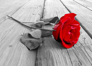 Red Rose Black White Wall Mural Photo Wallpaper Flower Modern