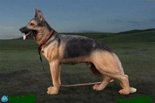 DID 3-R 1 6 Tier Serie Schäferhund AS003
