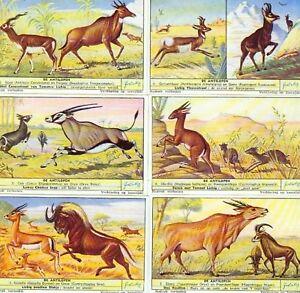 LIEBIG : S_1559 : 'Antilopes (les)