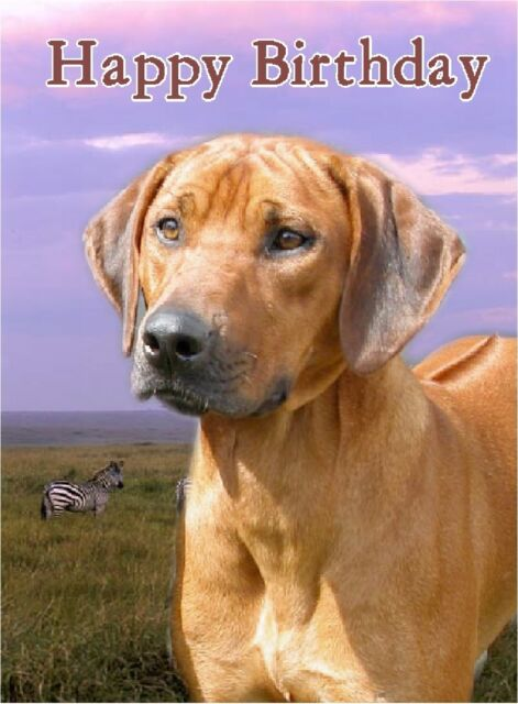 Boxer Dog A6 Christmas Card Design XBOXER-4 by paws2print