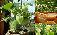 SEEDS – Exotic Cape Gooseberry aka Ground Cherry, Cerises de terres en français!