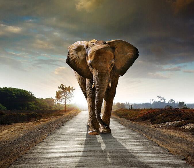 3D Elephant bulky walk WallPaper Murals Wall Print Decal Wall Deco AJ WALLPAPER
