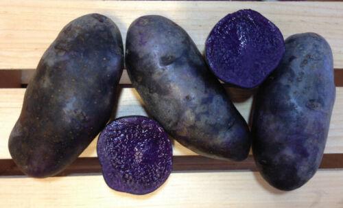 Heirloom Purple Peruvian seed Potatoes 2 LBS Chemical Free $6.45 plus ship