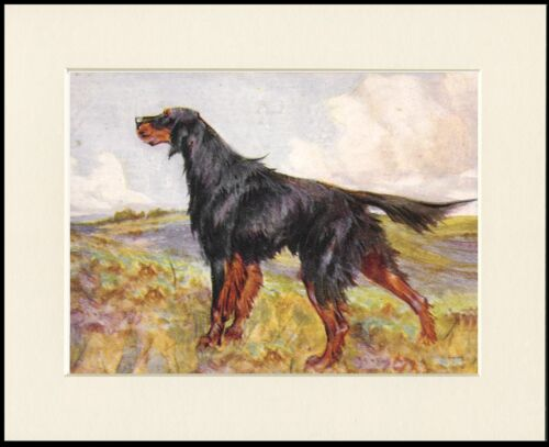 GORDON SETTER LOVELY STANDING DOG PRINT MOUNTED READY TO FRAME