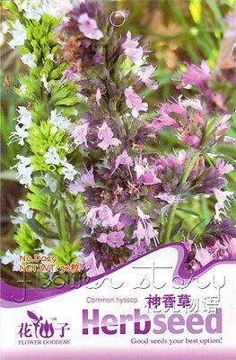1 Pack Common Hyssop Seeds Heirloom Herb Seeds Organic Garden Plant Hot