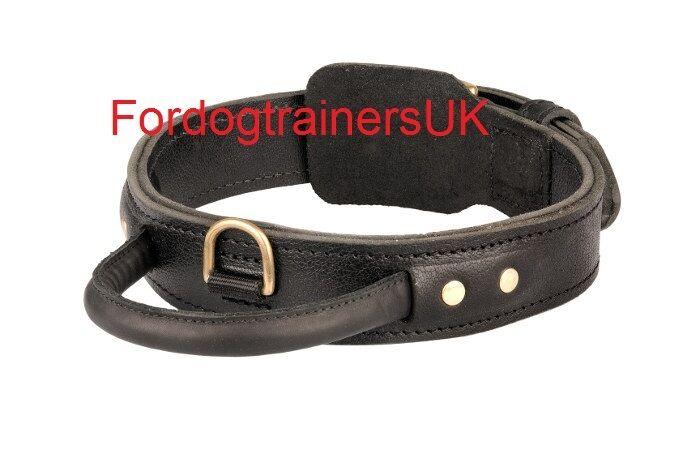 COLLARE per cani in pelle con maniglia per Cani Forti | Grande Cane Collare 1 34 Pollici di larghezza