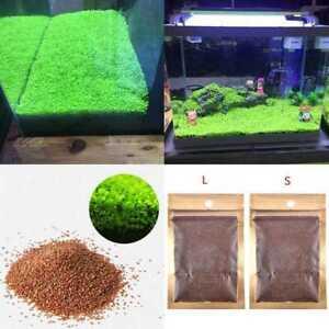 Aquarium-Grassamen-Wasser-Aquatic-Aussaat-Wasserpflanze-Pflanzen-Samen-Seed-M4M0