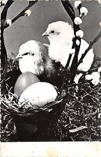 B41025 animals animaux deux poulets chick egg  easter ostern